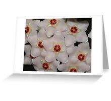 HOYA FLOWER Greeting Card