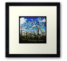 Springtime in the orchard Framed Print