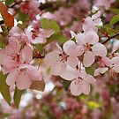 Spring in the Pink by Jenn  Dixon