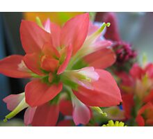Indian Paint Brush (color) Photographic Print