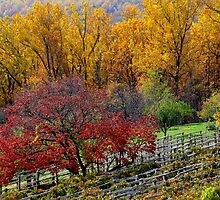 Fall in Virginia by JanG