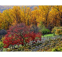 Fall in Virginia Photographic Print