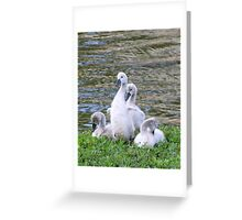 ready to rumble Greeting Card