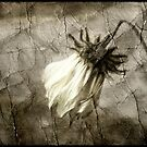 ~ What Becomes of the Broken Hearted ~ by tonilouise