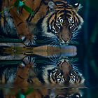 Sumatran tiger reflection by Sheila  Smart