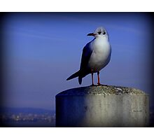 Meditating Seagull Photographic Print