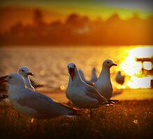 Sea gulls by Wanagi Zable-Andrews