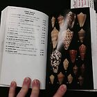 Cone Shells in a Book by Bailey Taylor
