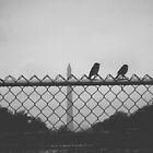 Birds Overlooking Washington Monument by Bailey Taylor