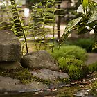 Little pond by ablyth