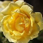 Happy Yellow Rose by Joy Watson