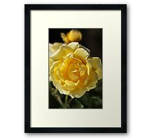 Happy Yellow Rose Framed Print