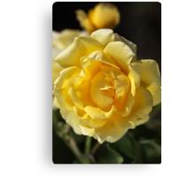 Happy Yellow Rose Canvas Print