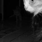 cats.... by xXDarkAngelXx