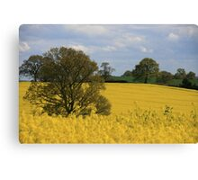 Tree in a sea of oil seed rape Canvas Print