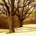 Great winter oaks of Iowa by Julie  Davison