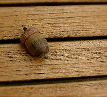 Acorn on wood table by Julie  Davison