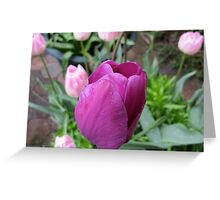 Pink and Purple Tulips Greeting Card