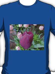 Pink and Purple Tulips T-Shirt