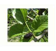 Delicious Mulberry Art Print