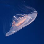 Jellyfish 2 by Justine McCreith