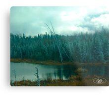 Evergreens of Northern Ontario Metal Print