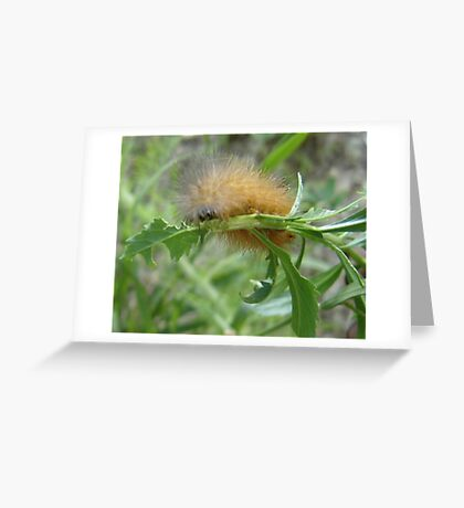 Hungry Little Fur Ball Greeting Card