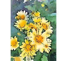 Yellow Daisies Digital Watercolor Photographic Print