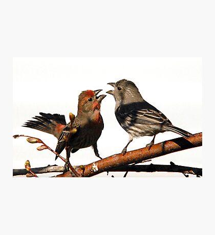 Mating Rituals Photographic Print
