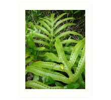 young fern, Lord Howe Island Collection Art Print