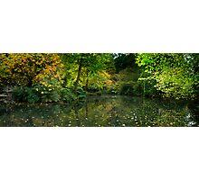 Burnham Beeches Photographic Print