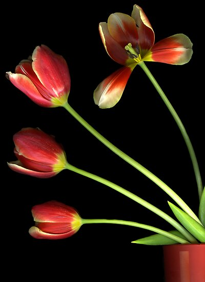 Pot O' Tulips by Christian Slanec   FineArt Studio