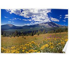 Rocky Mountain WIldflowers Poster