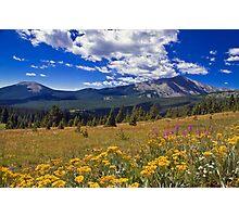 Rocky Mountain WIldflowers Photographic Print