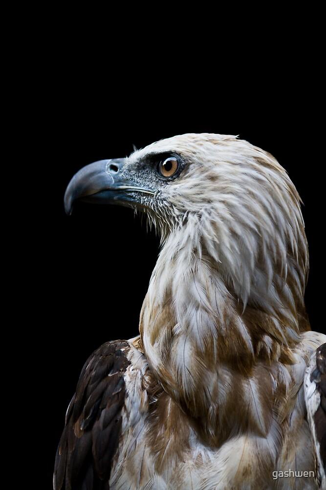philippine eagle by gashwen