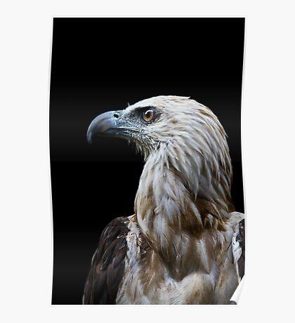 philippine eagle Poster