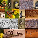 Top 20 2014 by Neil Bygrave (NATURELENS)