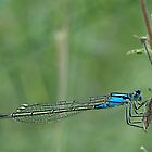 Blue Damselfly by GayeL Art
