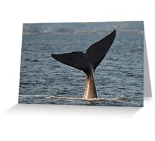 Southern Right Whale 10 Greeting Card
