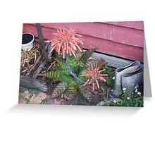 gardeners success Greeting Card