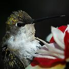 Bad Hair Day by Dennis Jones - CameraView