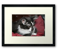 Bundle of fur Framed Print