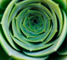 Green houseleek     Sticker