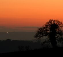 Winter tree shilouetted against a sunset by peteton