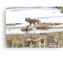 Yellowstone National Park - ? Sandhill Crane Canvas Print