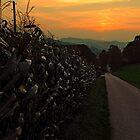 Cornfields with sundown | landscape photography by Patrick Jobst