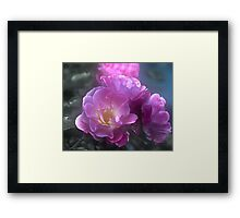 Pretty Pink Roses Framed Print