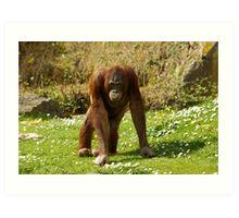 Miss Orangutan 2008 Art Print
