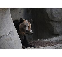 Grizzly cubs Photographic Print