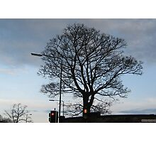 City Tree at Red Light Photographic Print